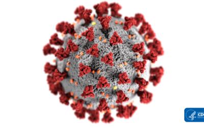 Cała prawda o koronawirusach